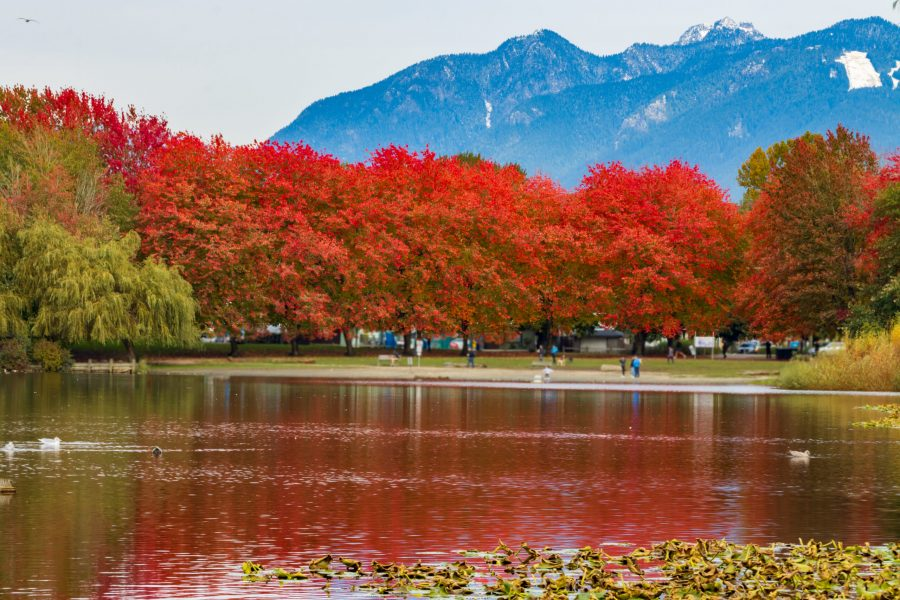Fall Colors in Vancouver