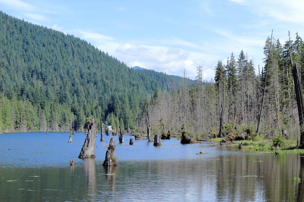 Diez Vistas Trail 2