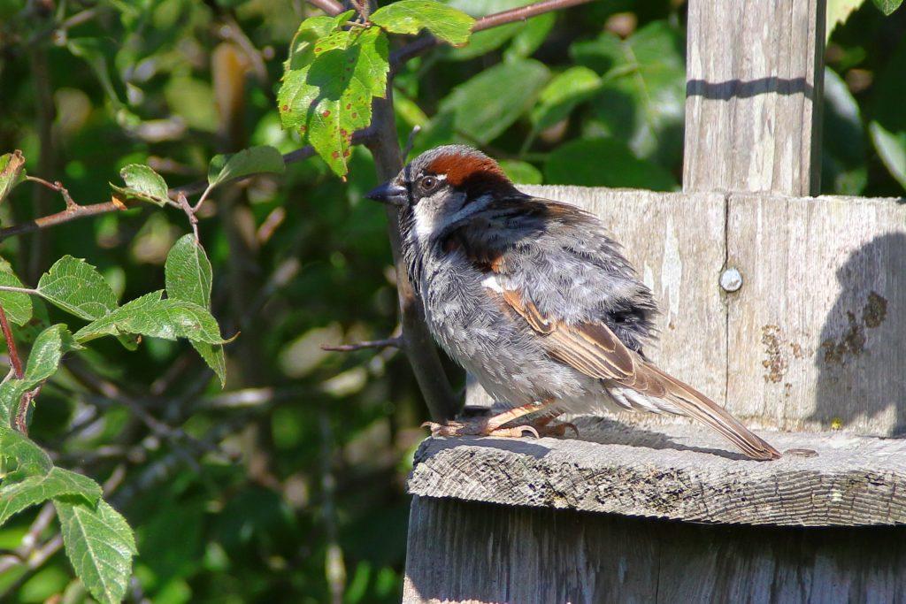 Bird Photos 2