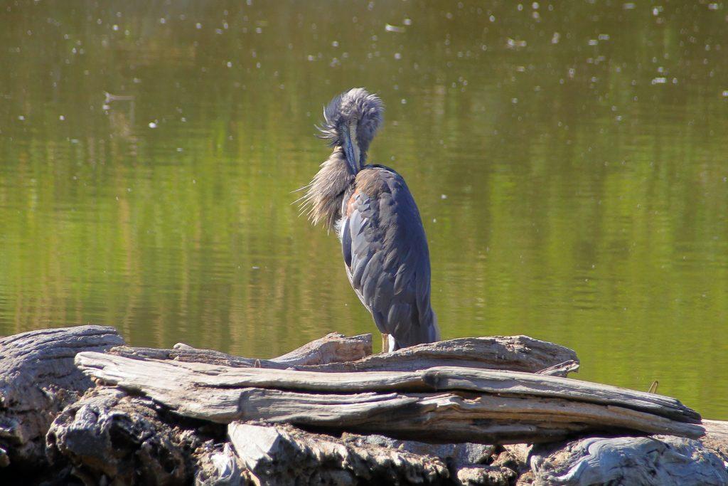 Bird Photos 3