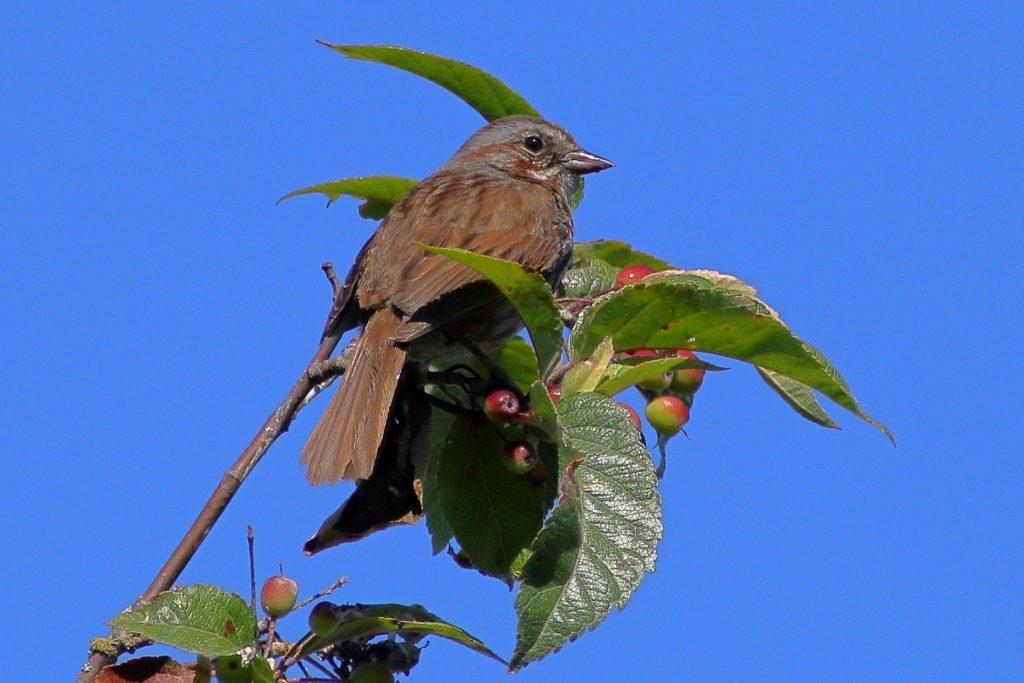 Bird Photos 4