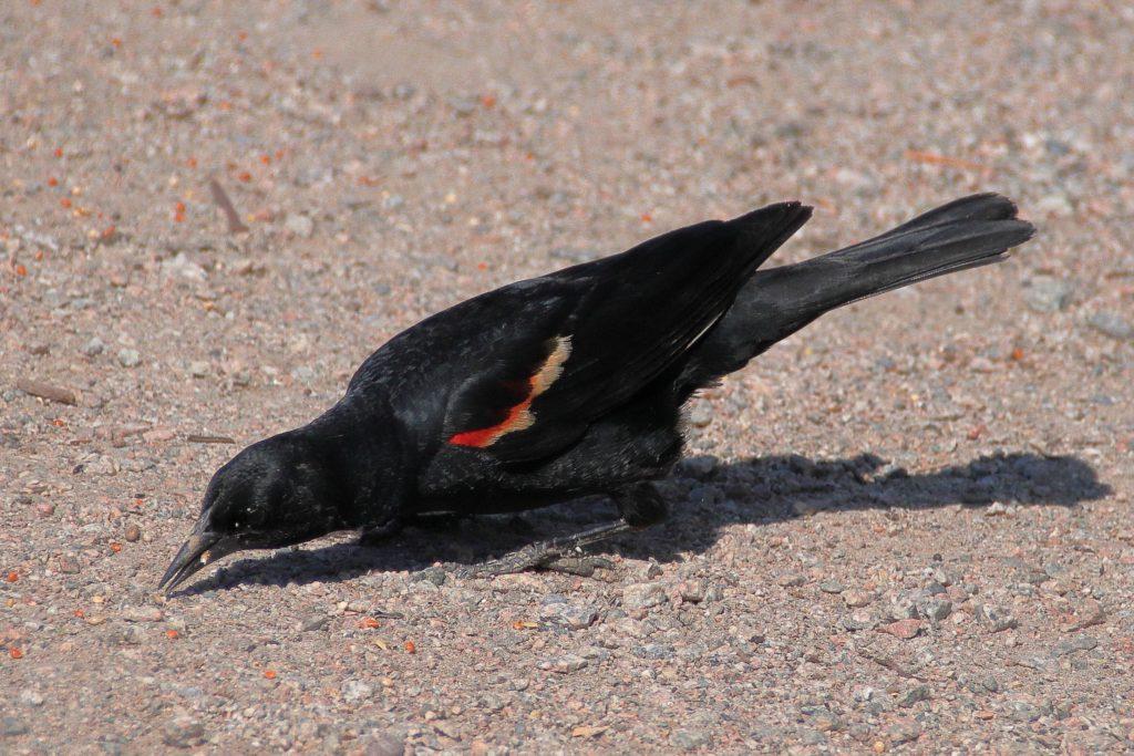 Bird Photos 5