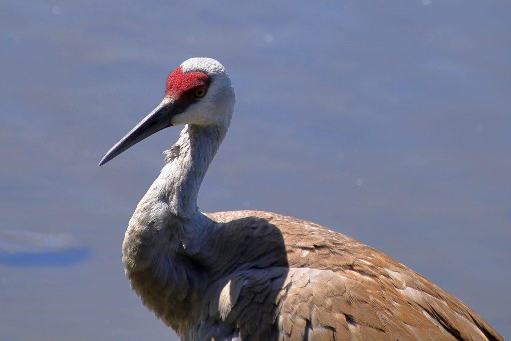 Bird Photos 11