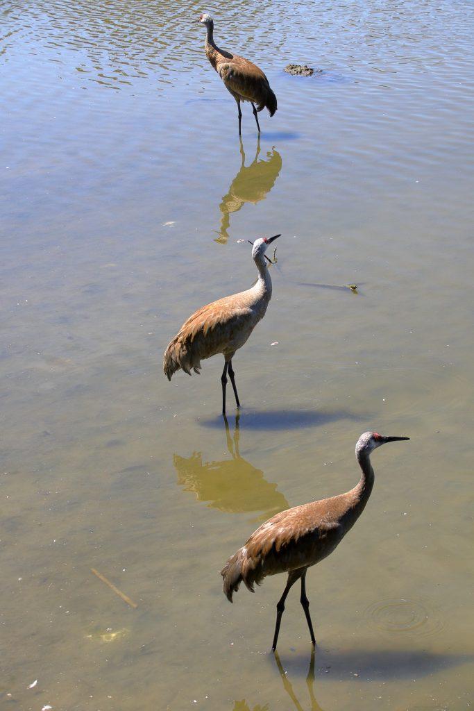 Bird Photos 12
