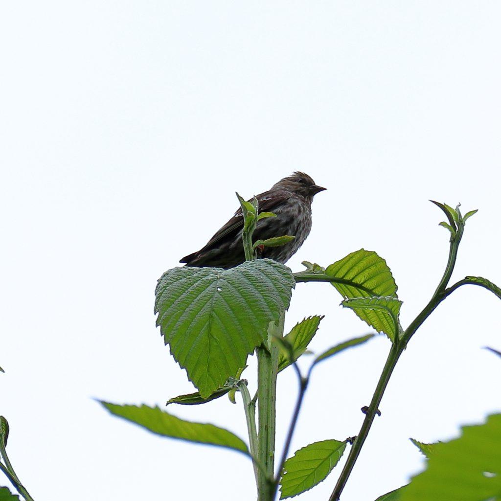 Bird Photos 13