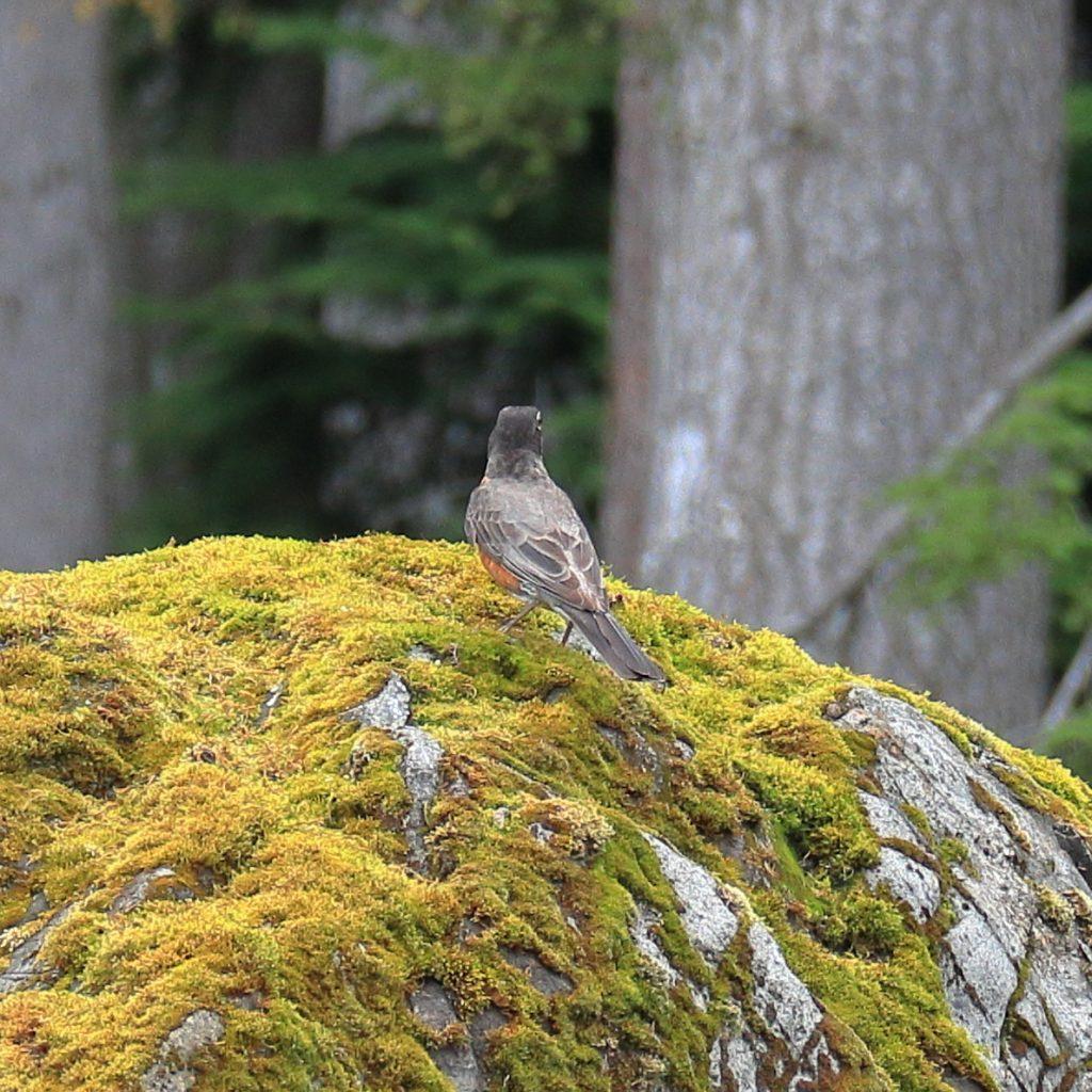 Bird Photos 14