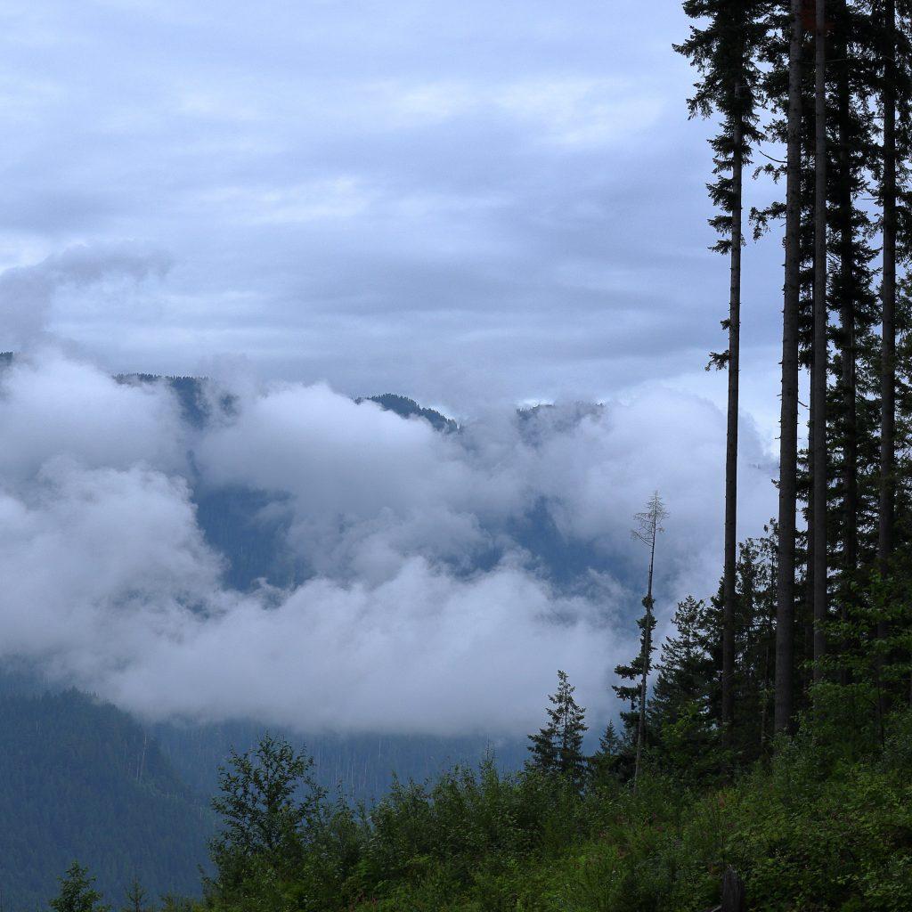 Woodland walk trail 2