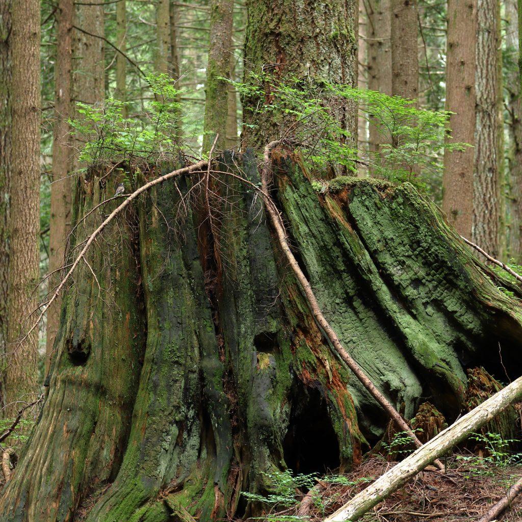 Woodland walk trail 3