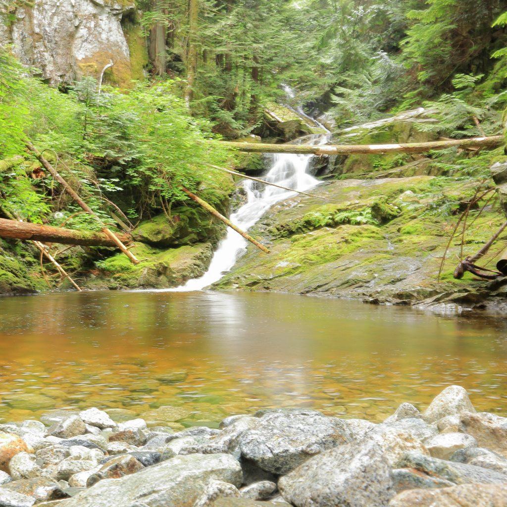 Woodland walk trail 4