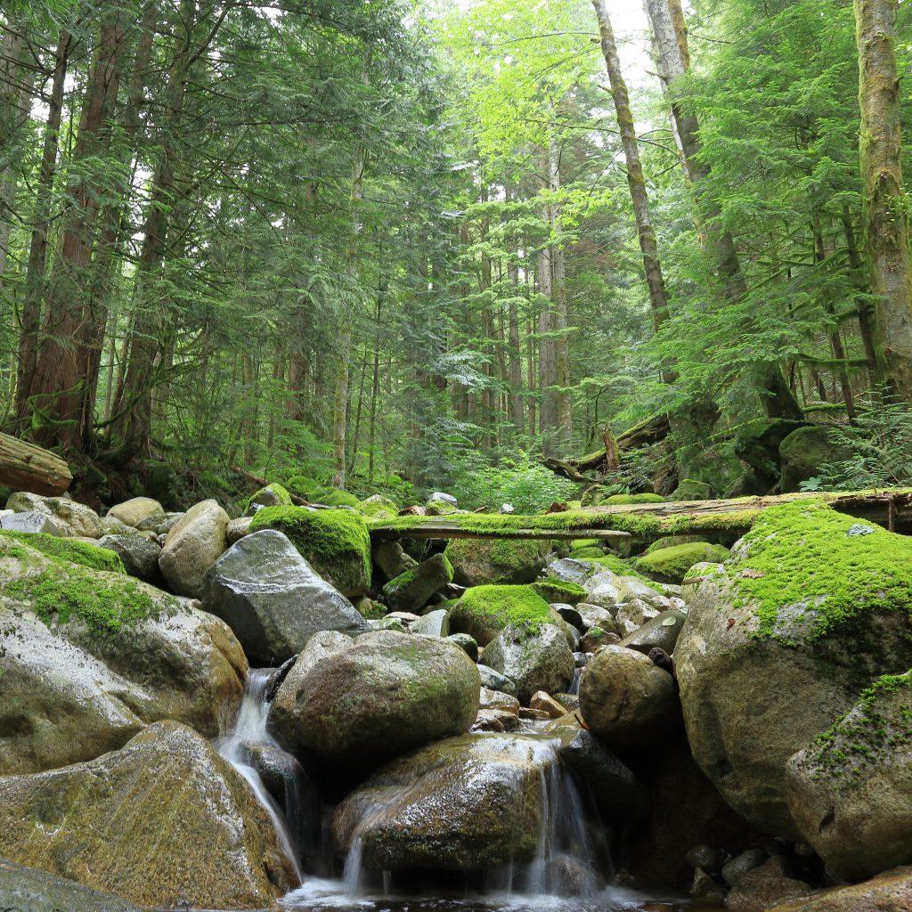 Woodland walk trail 6