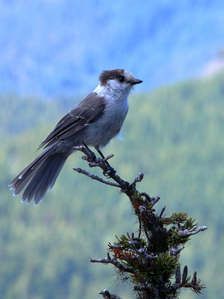 Bird Photos 15