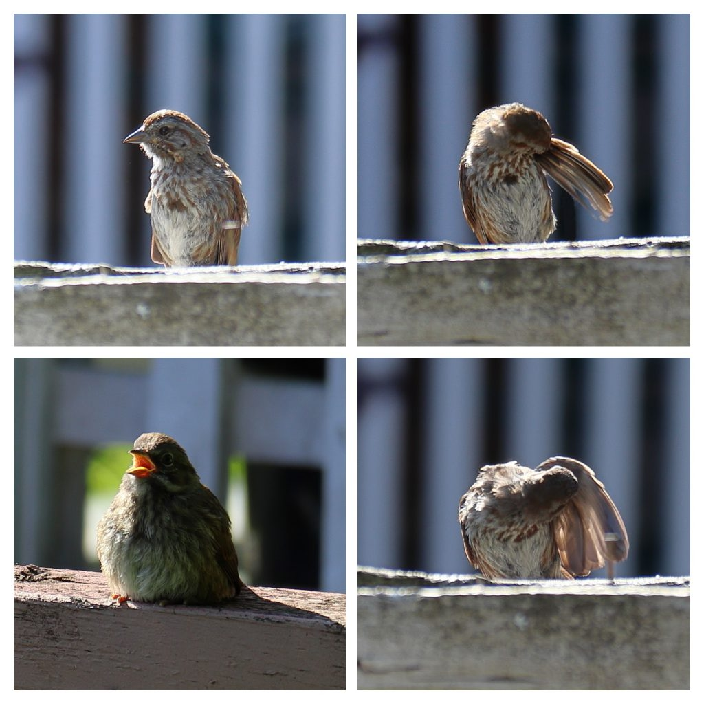 Bird Photos 16