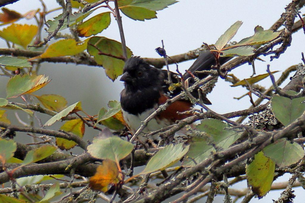 Bird Photos 18
