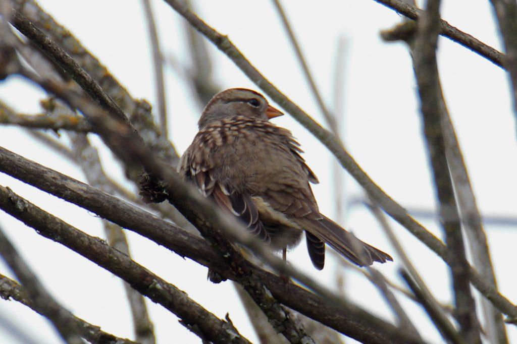 Bird Photos 21
