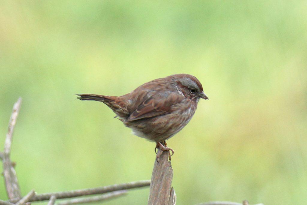 Bird Photos 24