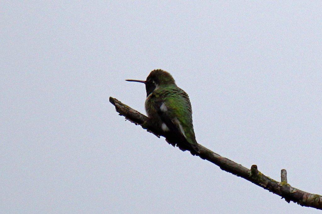 Bird Photos 27