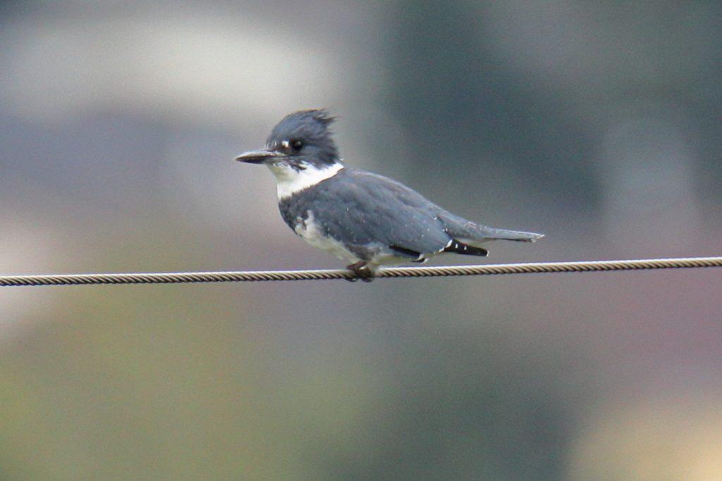 Bird Photos 30