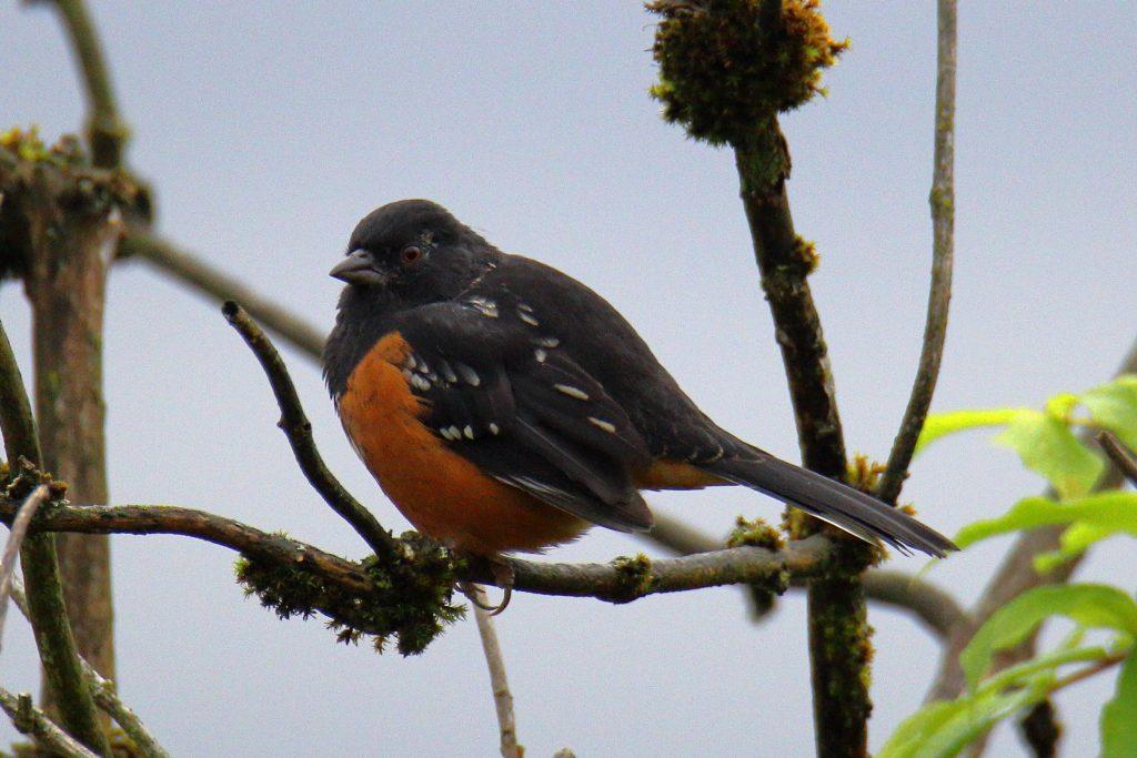 Bird Photos 32