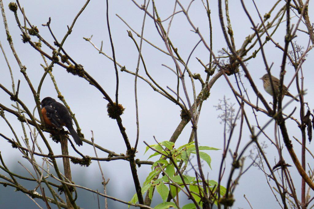 Bird Photos 33