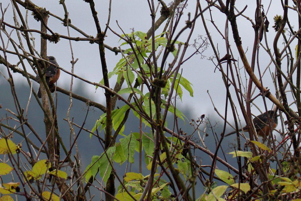 Bird Photos 34