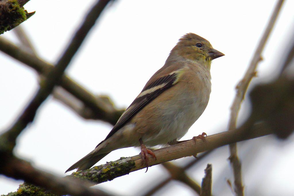 Bird Photos 35