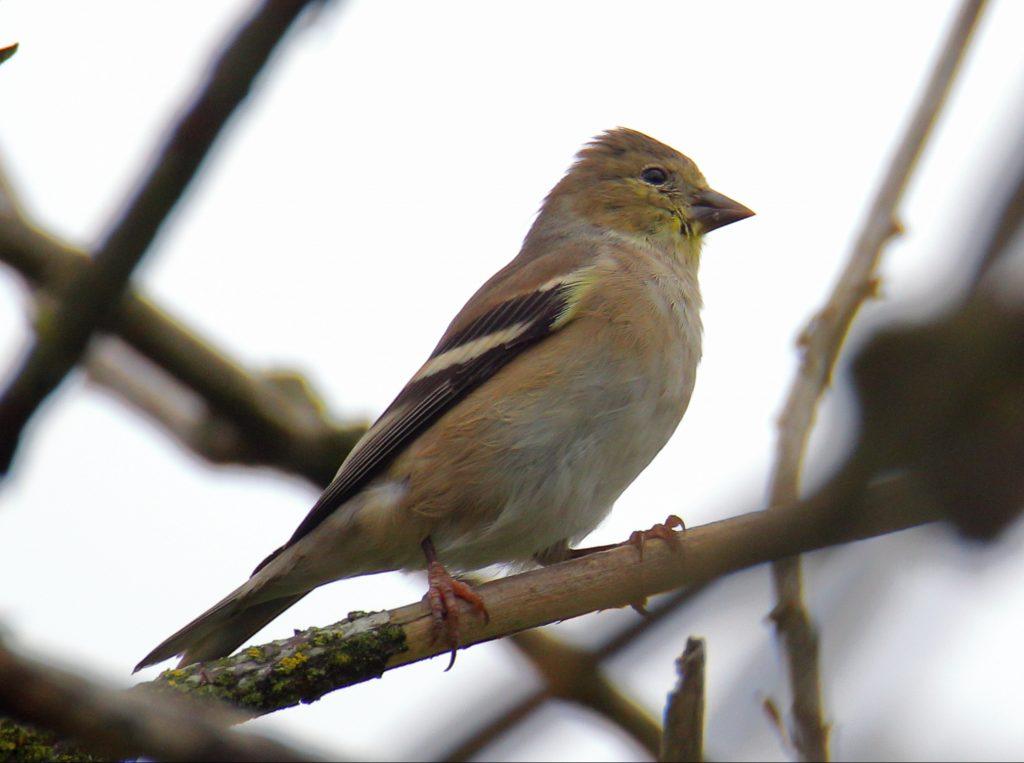 Bird Photos 1