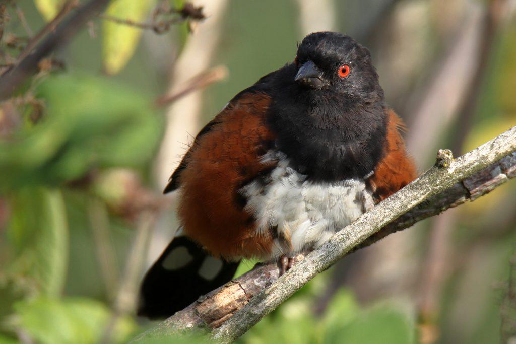 Bird Photos 36
