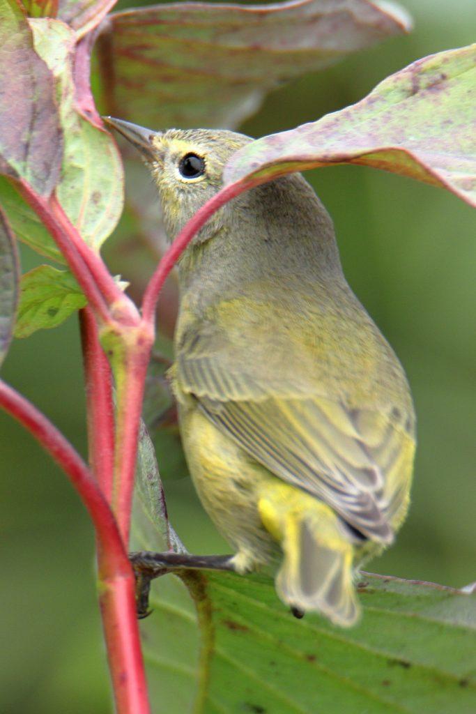 Bird Photos 70
