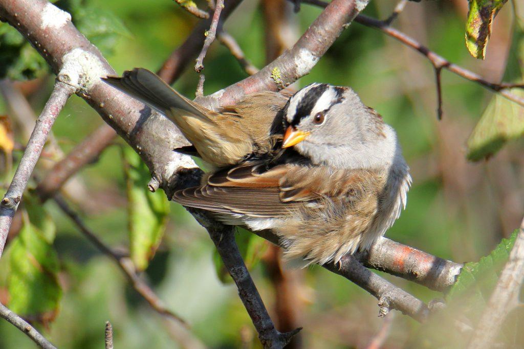 Bird Photos 37