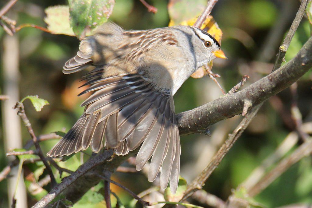 Bird Photos 38