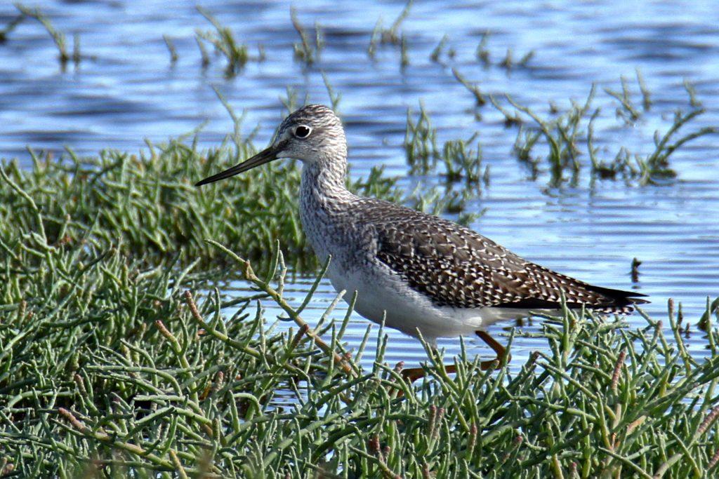 Bird Photos 47