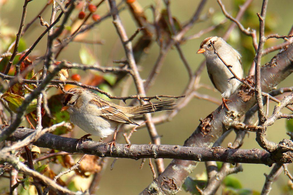 Bird Photos 48