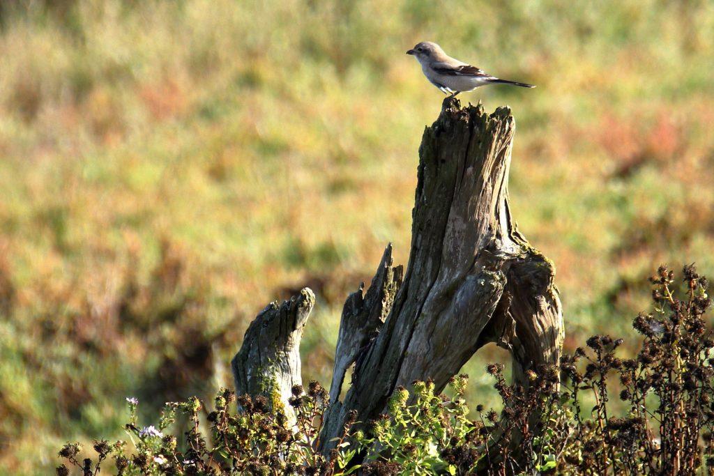Bird Photos 51