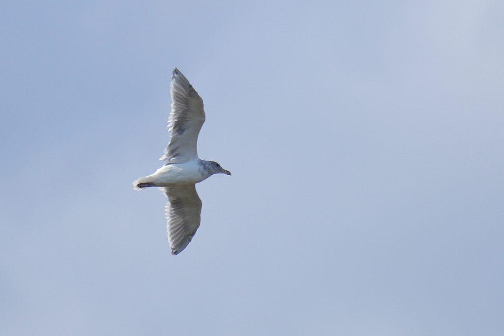 Bird Photos 52