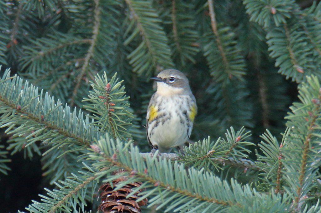 Bird Photos 56