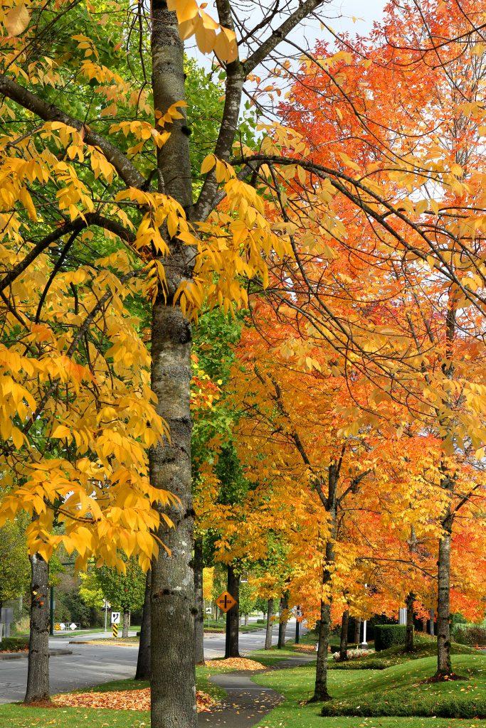 Fall colors 13