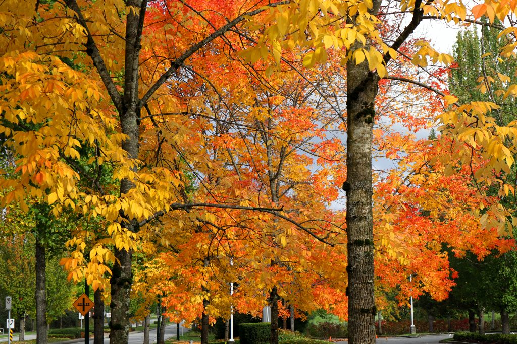 Fall colors 15