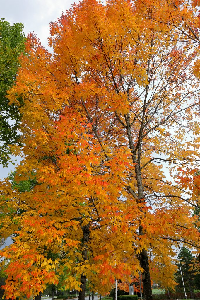 Fall colors 12