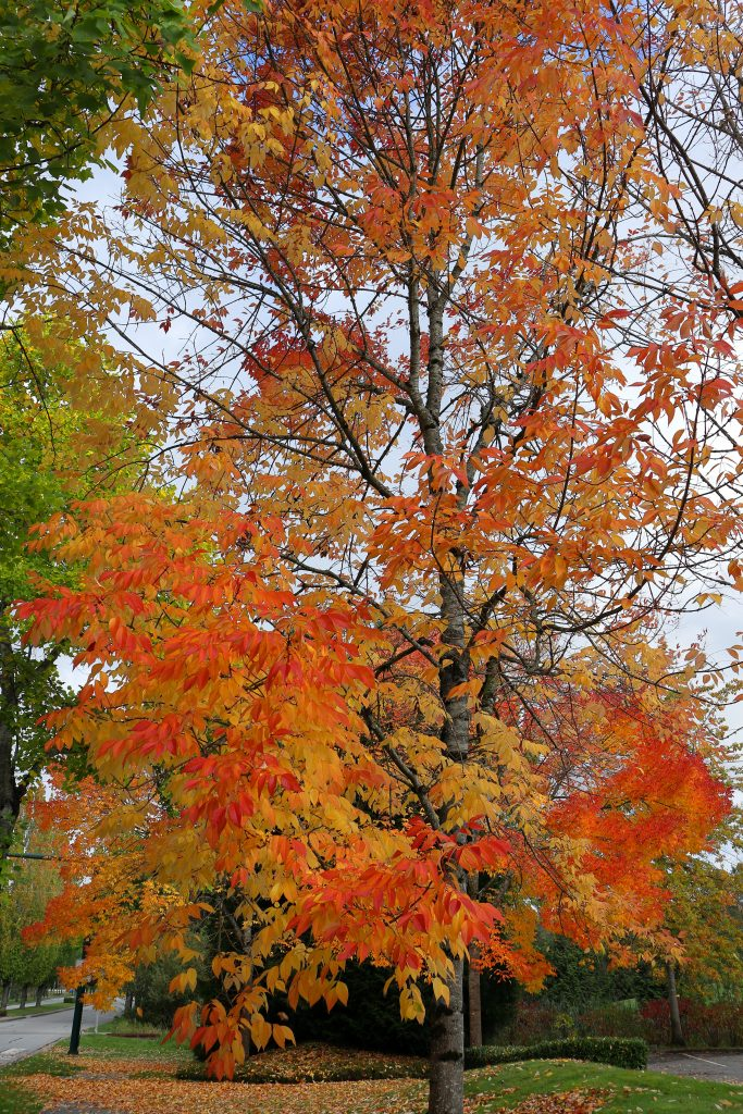 Fall colors 13