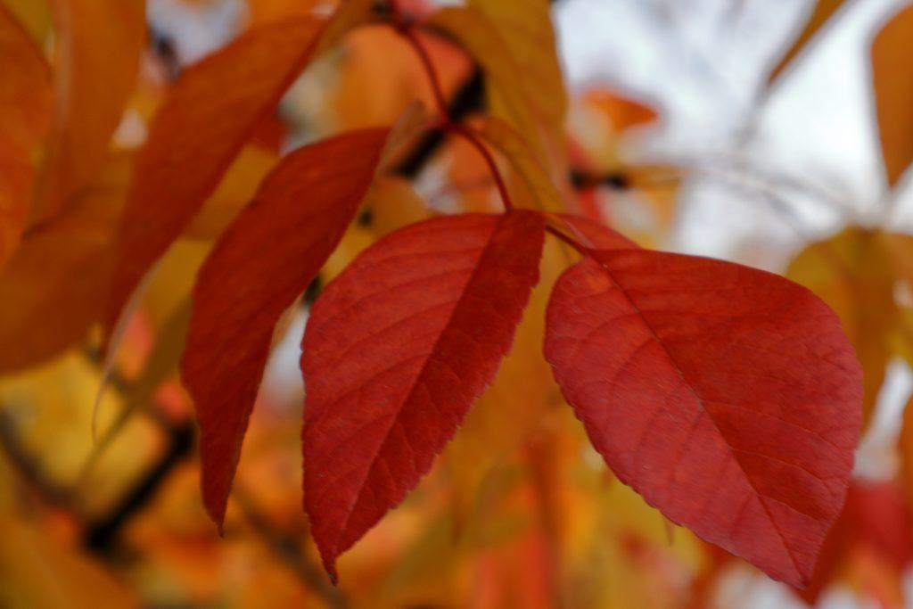 Fall colors 20