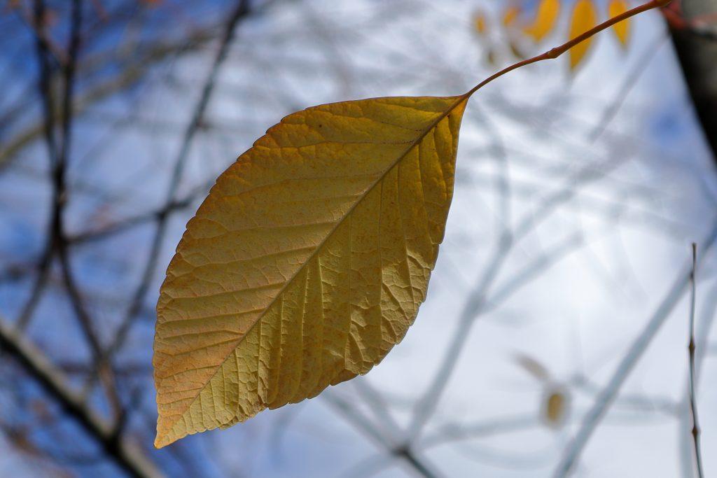 Fall colors 23