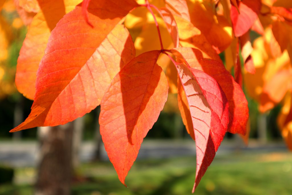 Fall colors 25