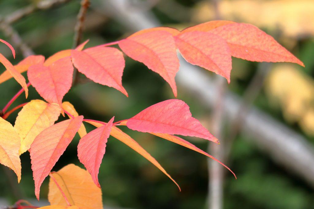 Fall colors 28