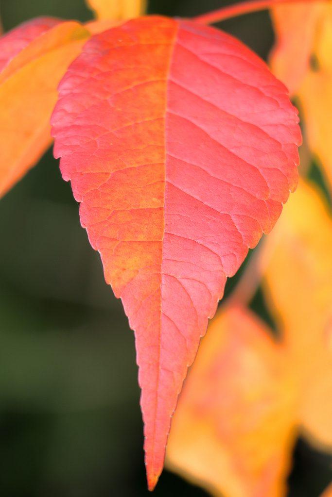 Fall colors 29