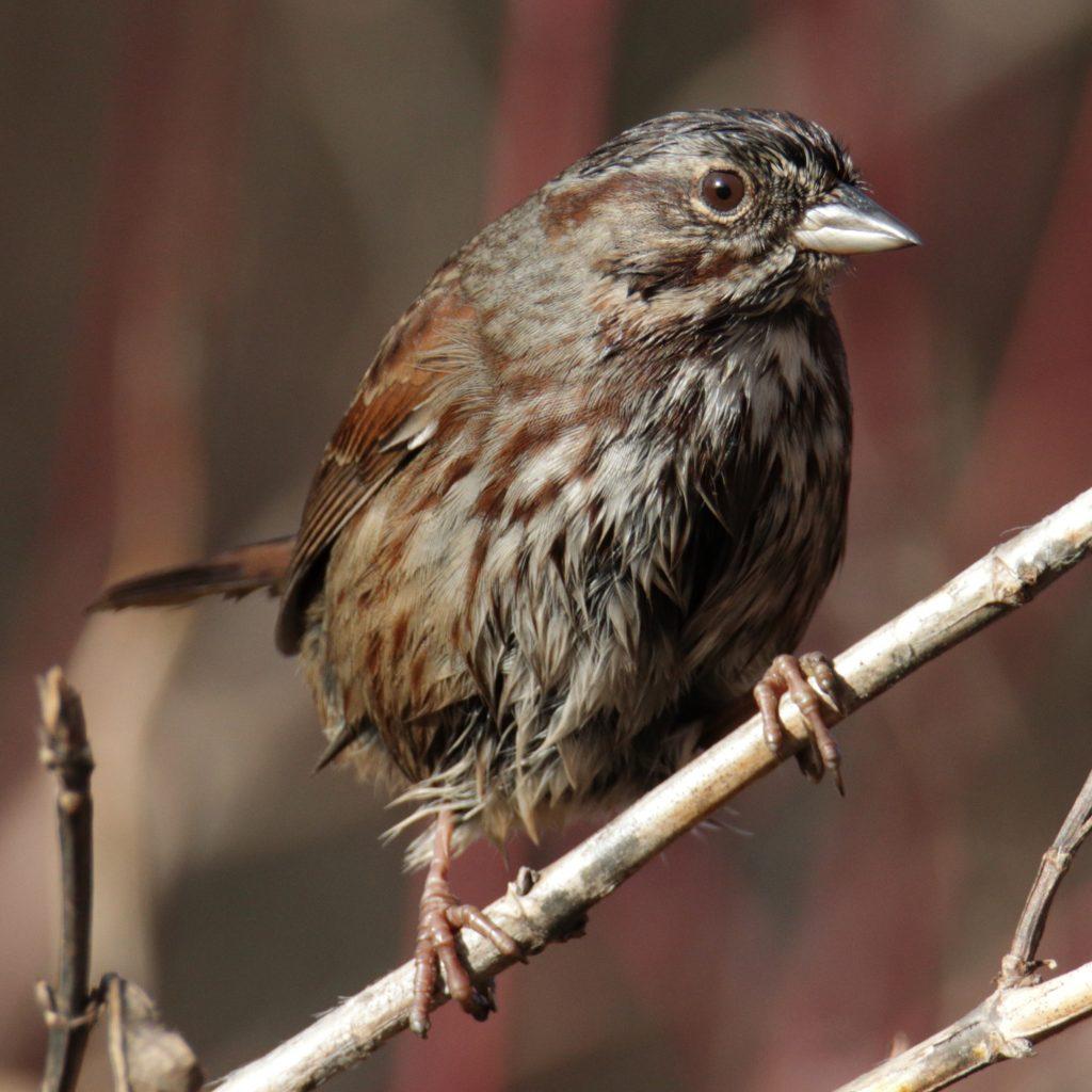 Bird Photos 60