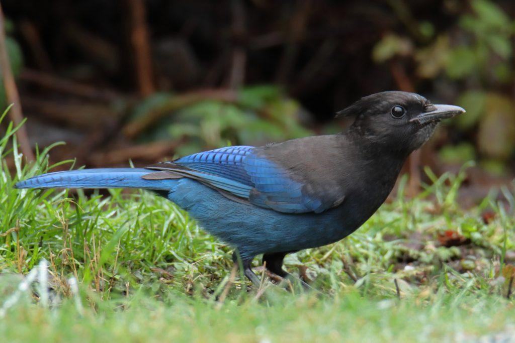 Bird Photos 61