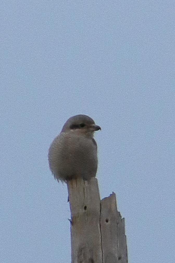 Bird Photos 62