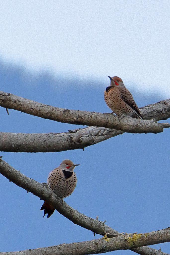 Bird Photos 57