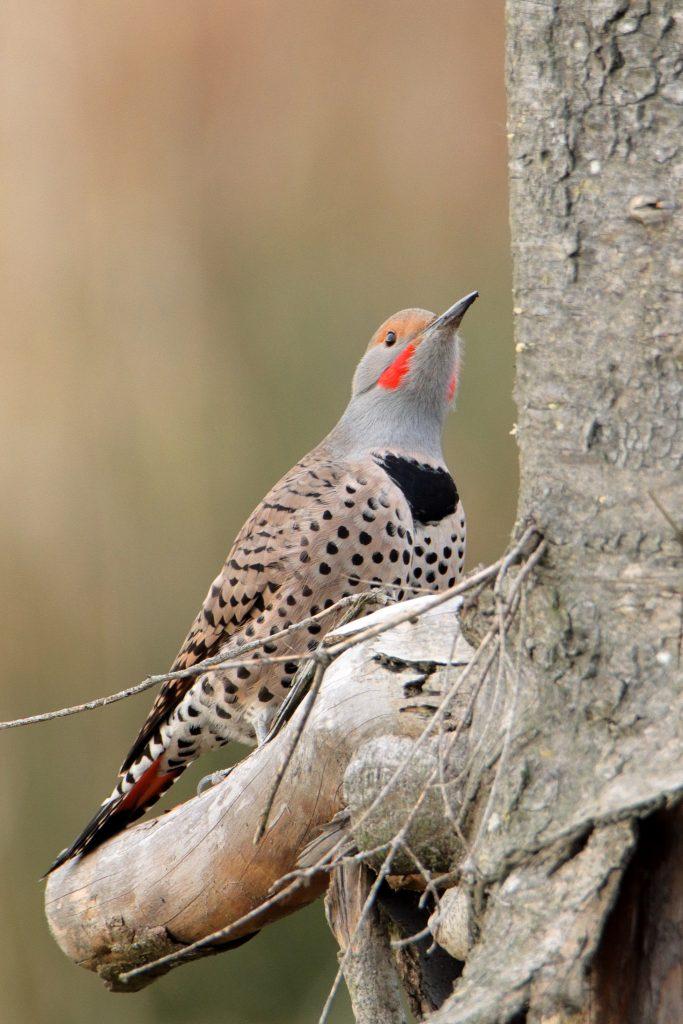 Bird Photos 58