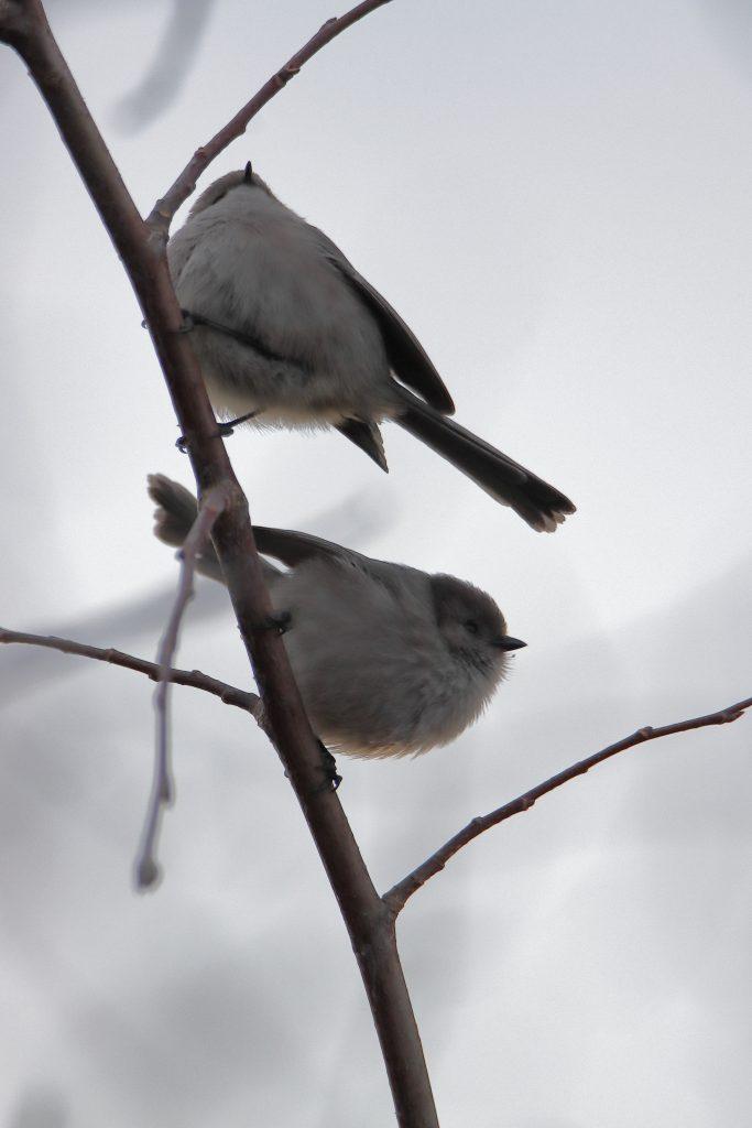 Bird Photos 67